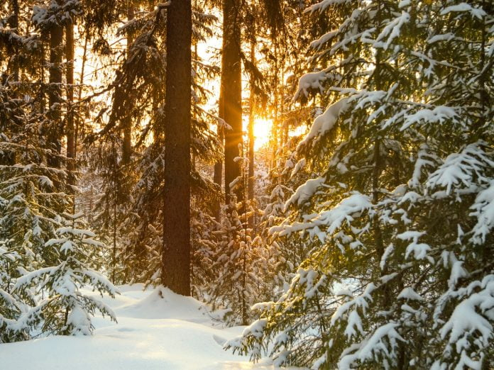 idaho winter landscape with the forest and sunset