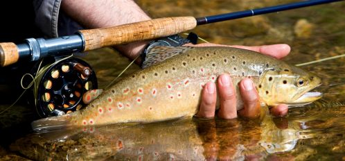 a person holding a brown trout and a fishing rod